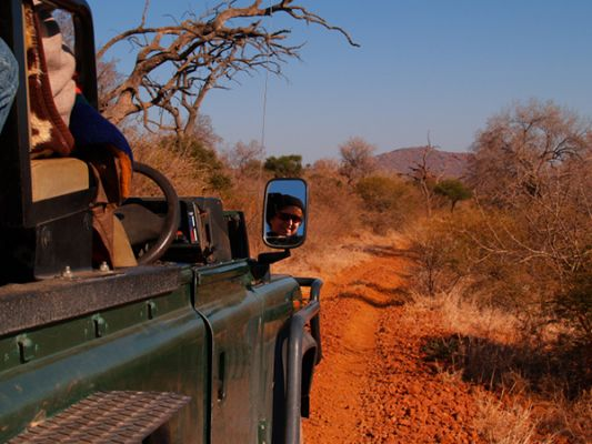 Game Drive (Safari)